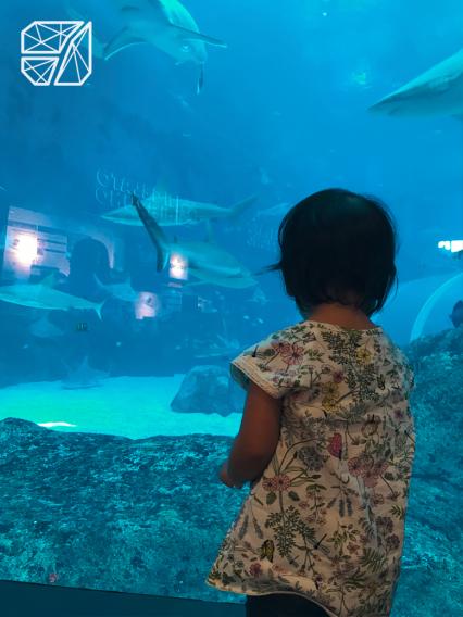 EA_Sharks